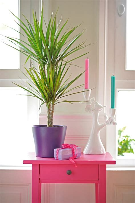 Feng Shui Garten Pflanzen 2927 by Feng Shui Pflanzen F 252 R Harmonie Und Positive Energie Im