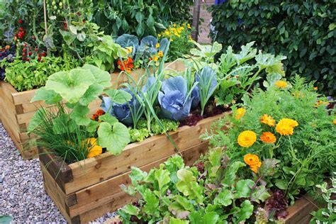 Pics Of Vegetable Gardens 5 Ways To Add More Color To Your Vegetable Garden