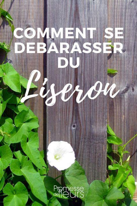 Eliminer Le Liseron by Liseron Comment S En D 233 Barrasser Jardin Jardins