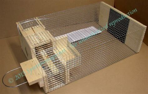 house sparrow trap plans house sparrow trap design home design and style