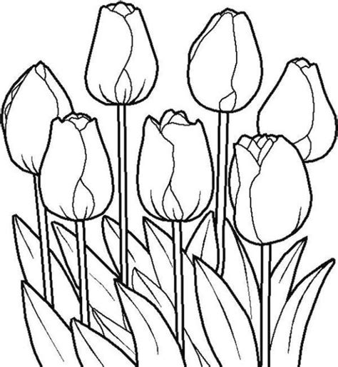 coloring pictures of tulip flowers tulip flower coloring pages coloring 2