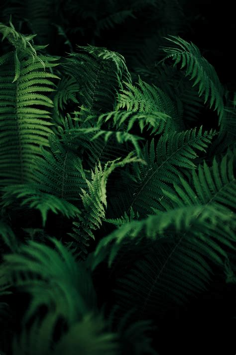 nature ferns plants wallpapers hd desktop  mobile