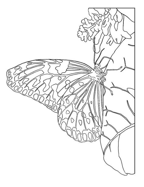 detailed butterfly coloring pages get coloring pages