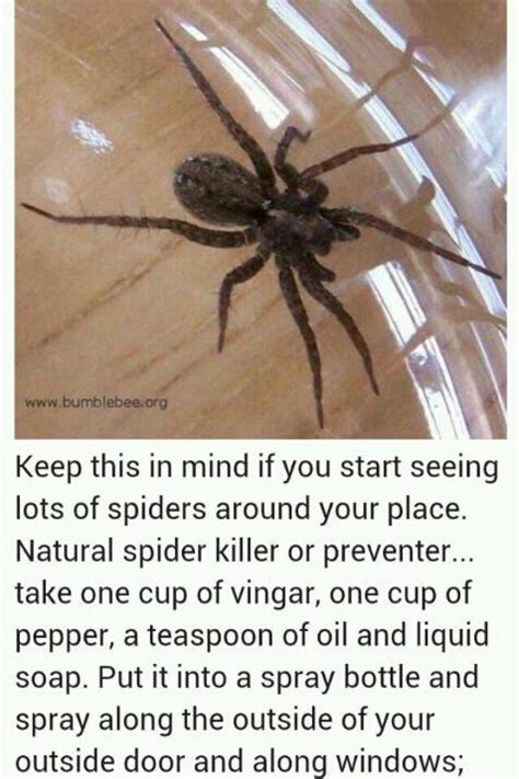 how to keep spiders out of your bed 25 best ideas about keep spiders away on pinterest tick