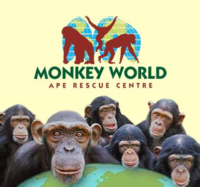 rescued ape quartet books monkey world ape centre rescue