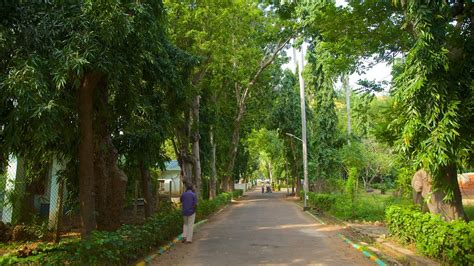 Gardens Kolkata by Botanical Gardens In Kolkata Expedia