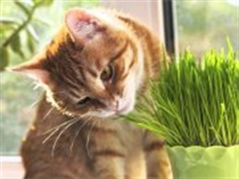 grass and throwing up dogs cats pets dogs cats pets