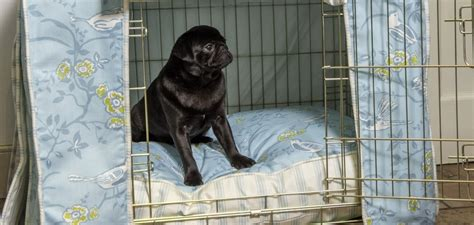 pug crate crate your pug pugguide