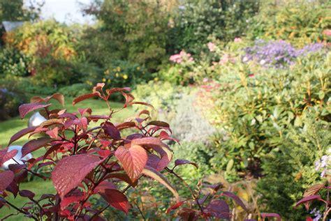 beste cottage garden pflanzen gartenpflege im herbst zinsser gartengestaltung