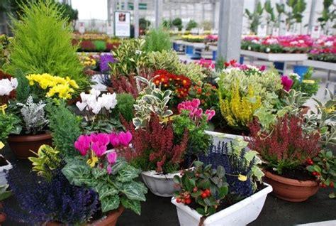 piante e fiori da esterno fiori da esterno giardinaggio fiori da esterno