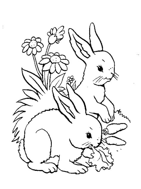 Woodland Animals Coloring Pages forest animals coloring pages coloringpagesabc