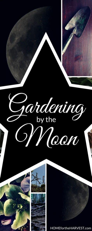 gardening   moon   align  garden  lunar