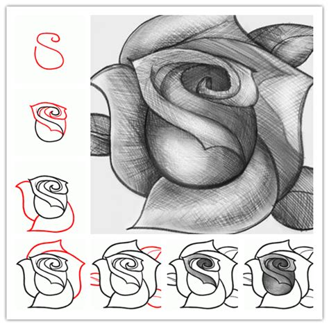 how to draw doodle roses the gallery for gt roses to draw step by step