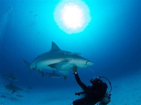 dive shark bull shark diving cancun squalo divers scuba diving cancun