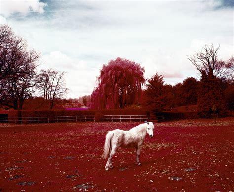 designboom ed thompson ed thompson reveals the unseen through infrared photography