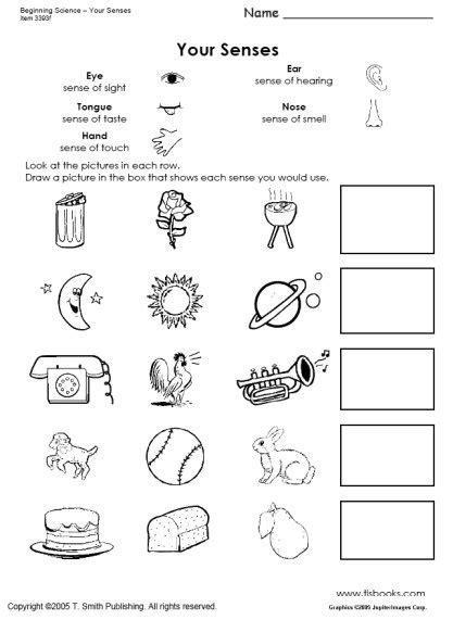 worksheets for preschoolers in science free coloring pages of pre k senses