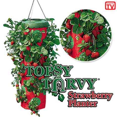 Topsy Turvy Strawberry Planter by How To Grow Tomatoes Strawberries Topsy