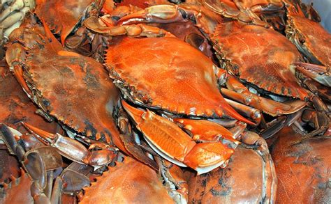 44 best images about blue crabs on pinterest old bay