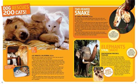 125 true stories of 142630918x national geographic kids 125 true stories of amazing animals scholastic shop