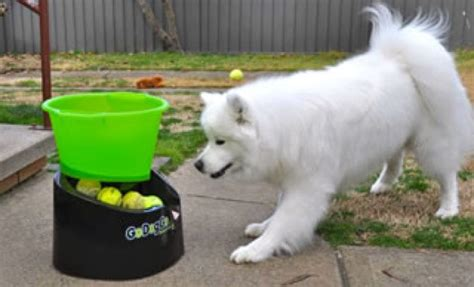 fetch machine godoggo fetch machine review dogtime