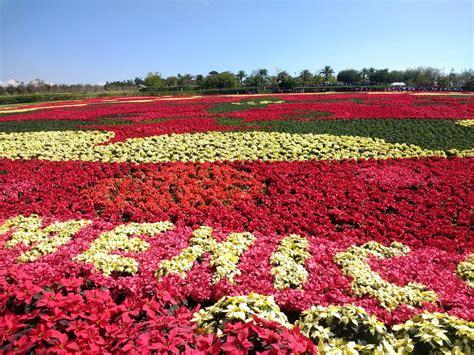 diez jardines por el mundo para recibir la primavera el jardines de m 233 xico logra r 233 cord guinness por tapete floral