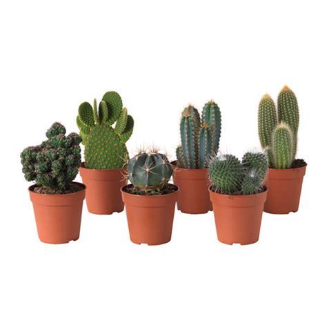 vasi per piante ikea cactaceae pianta da vaso ikea