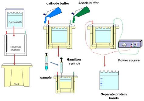 lab bench electrophoresis 28 images laboratory lab