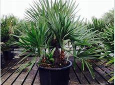 Plant Craft | plantANT.com Royal Jelly