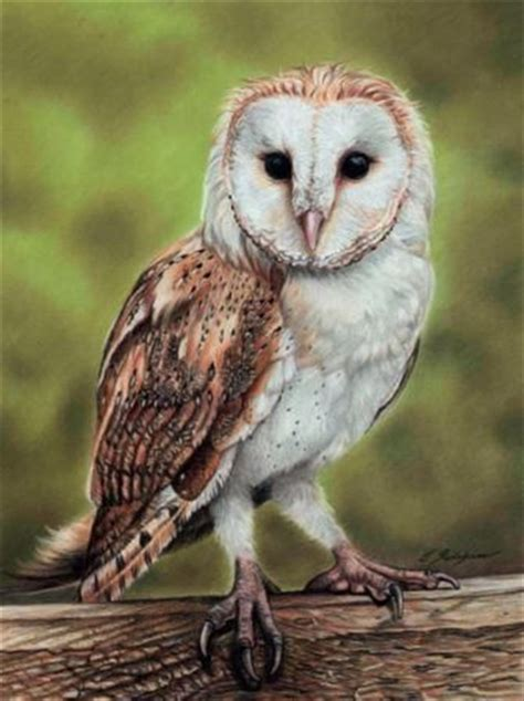 How To Draw A Barn Owl Using Pastel Pencils Barn Owl Drawing
