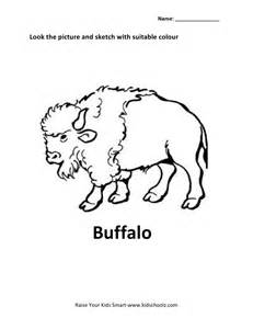 animals colouring worksheets buffalo kidschoolz
