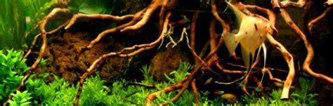 Aquarium Mit Wurzeln Einrichten 6735 by Wurzeln F 252 R Aquarien Kaufen Bei Aquariumpflanzen De