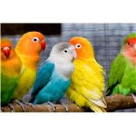 exotic pet bird species www pixshark com images galleries with a bite