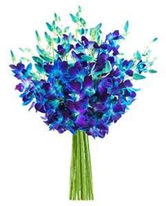 flowers without vase blue orchid bouquet 20 stems the kabloom collection