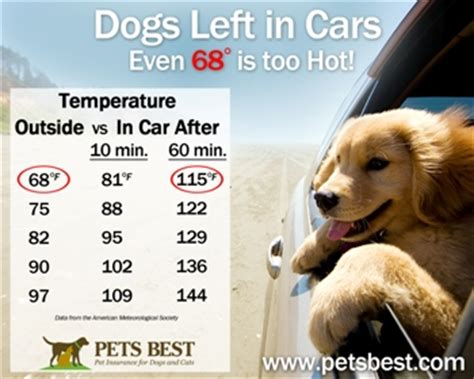 low temperature in dogs car temperature chart breeds picture
