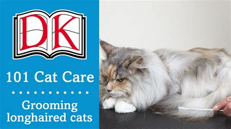 8 Tips On Grooming Your Cat by 101 Cat Care Cat Grooming For Longhaired Cats