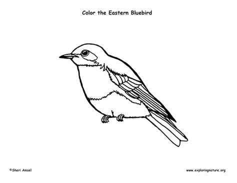 Bluebird Coloring Sheet Coloring Pages Bluebird Coloring Page