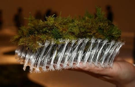 how to make a moss rug all moss carpet you can grow right in your home