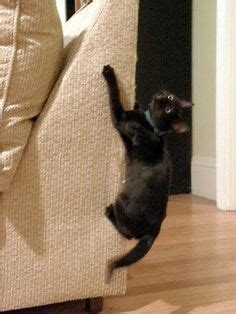 how to get your cat to stop scratching the couch 1000 images about couches on pinterest cat scratching
