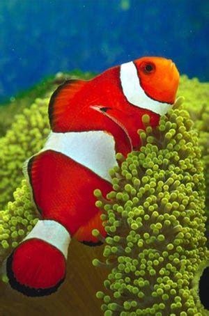 kisah inspiratif seekor ikan kecil  pemenang