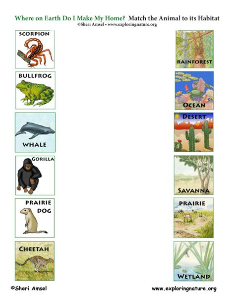 printable animal habitat matching game match the animals to their habitats game