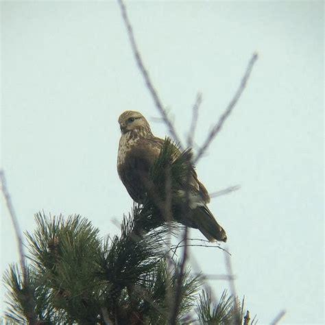 newburyport birders essex county ma southern nh bird