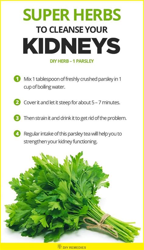 Parsley Detox Kidneys by 25 Best Ideas About Kidney Detox On Kidney