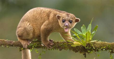 imágenes de animales insectívoros qu 233 animales pueden ser tus mascotas y cu 225 les no