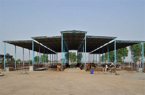 Shed Design For Dairy Farm by Mp Dairy Farm Sheds Dairy Farm Shed Dairy Farm