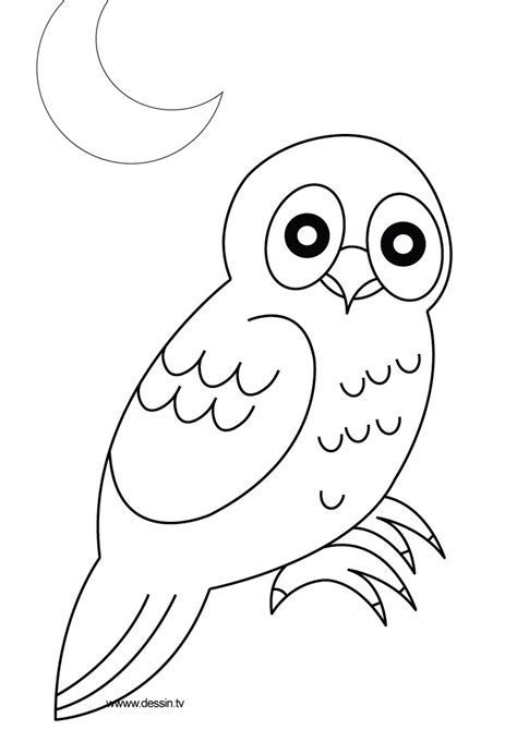 Free How To Draw A Owl Coloring Pages Owl Coloring Pages