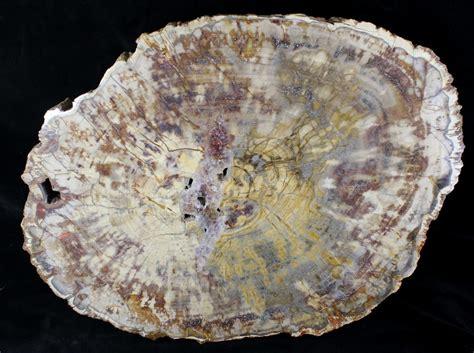petrified wood petrified wood for sale fossilera