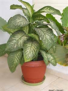 house plant identification house plant identification 28 images green house plant