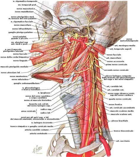 sintomi cervicale mal di testa artrosi cervicale sintomi terapie e prevenzione