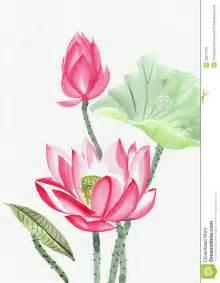 pintura da aquarela da flor de l 243 tus cor de rosa imagens