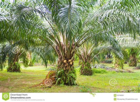 L Use Im Garten 3980 by 214 Lpalme Im Garten Stockbild Bild Ernte Produkt